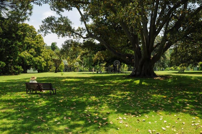 Governando e bellezza dei parchi fotografia stock libera da diritti