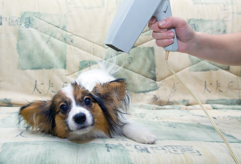 Governando per un cane fotografia stock