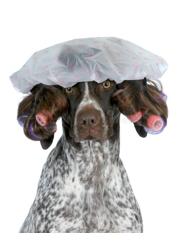 Governare del cane fotografia stock
