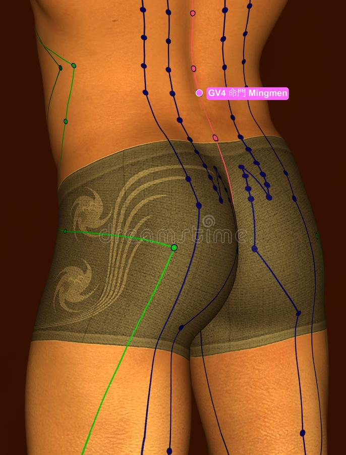 Acupuncture Point GV4 Mingmen, 3D Illustration, Brown Background stock images