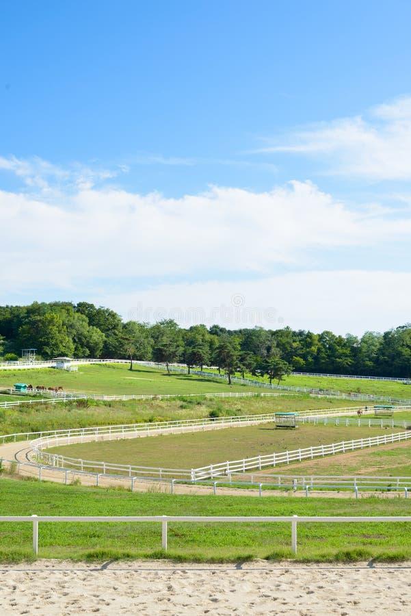 Goyang-SI, Corée - 16 juillet 2015 : Ranch de cheval de Wondang photographie stock libre de droits
