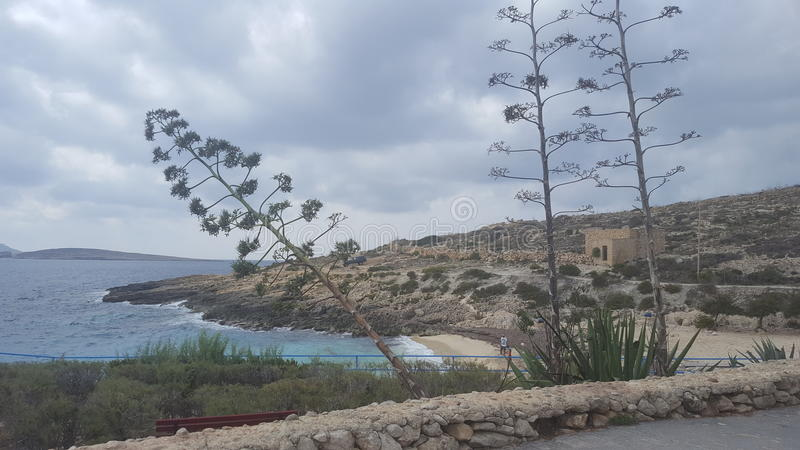Gozo behandelt royalty-vrije stock fotografie