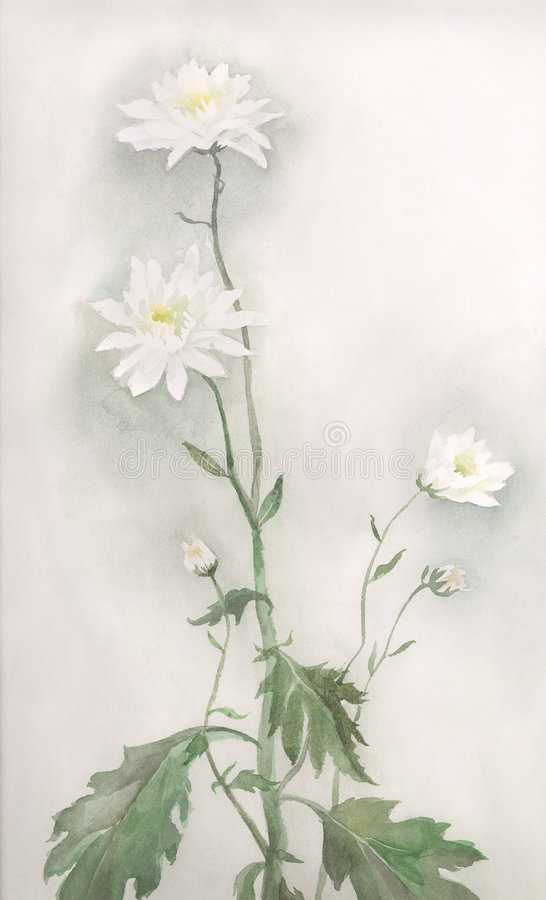 Gráfico blanco de la acuarela de la flor del crisantemo ilustración del vector