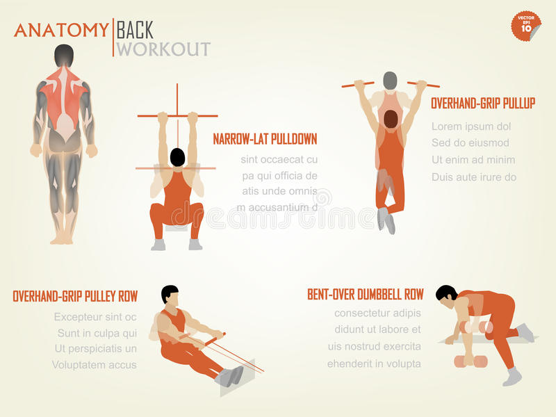 Gráfico bonito da informações de design do exercício traseiro abdominal fotos de stock royalty free