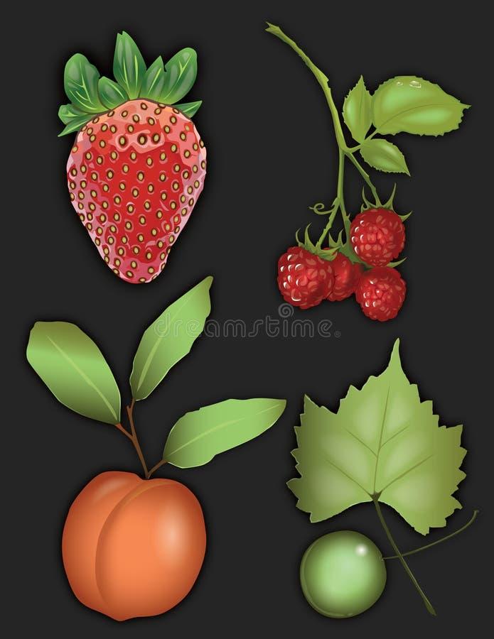 Gráfico de la fruta de la fresa, de la frambuesa, del melocotón, y de la uva imagenes de archivo