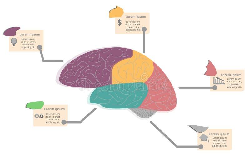 Gráfico de la información del diagrama del cerebro stock de ilustración