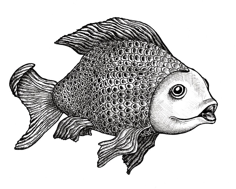 Gráfico de los pescados ilustración del vector