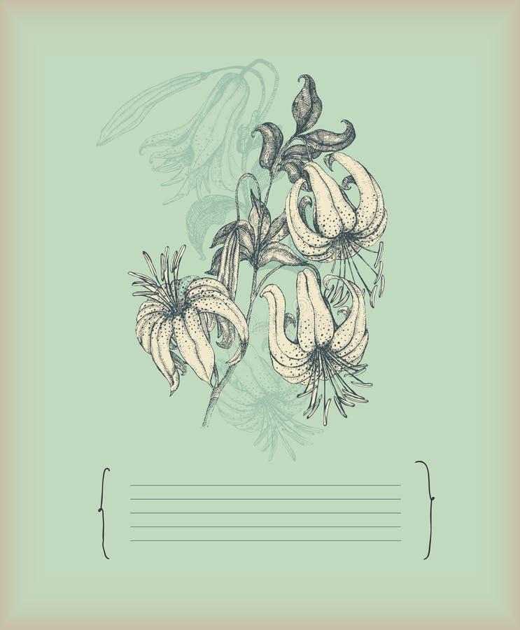 Gráfico Del Lirio De La Vendimia Imagen de archivo libre de regalías