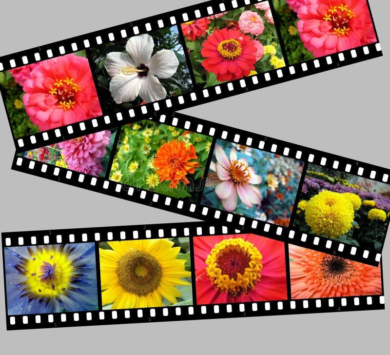 Gráfico do filmstrip da flor fotografia de stock