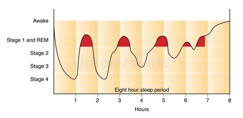 Gráfico do sono ilustração do vetor