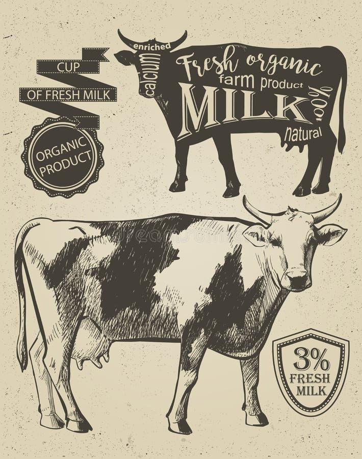 Gráfico do vintage da vaca ilustração stock