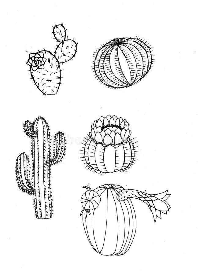 Gráfico dos cactos isolado Coleção do cacto com mão-desenho ilustração do vetor