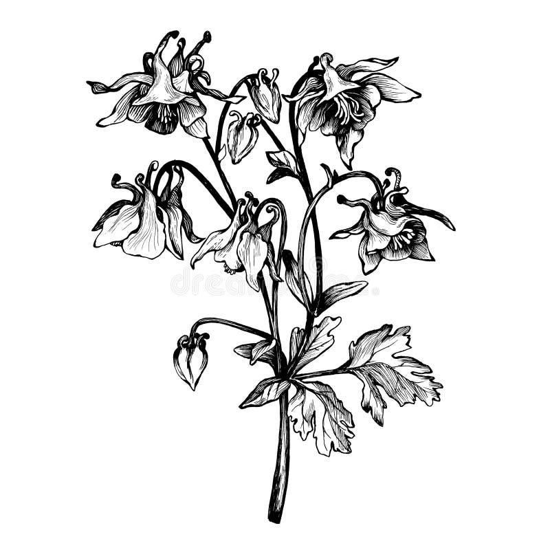 Gráfico el iris de la flor de la rama Garabato de la página del libro de colorear para el adulto y los niños Ejemplo blanco y neg libre illustration
