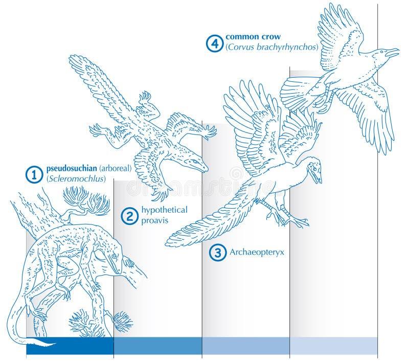 Gráfico que mostra a evolução de como os répteis foram transformados em pássaros ilustração do vetor