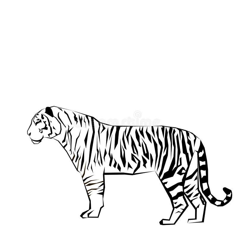 Gráfico salvaje de la fauna del mamífero de la fuerza del ejemplo del tigre ilustración del vector