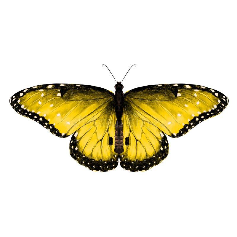 Gráficos de vector del bosquejo de la mariposa libre illustration