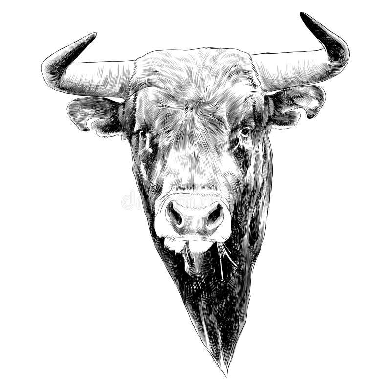 Gráficos de vetor do esboço de Bull ilustração do vetor