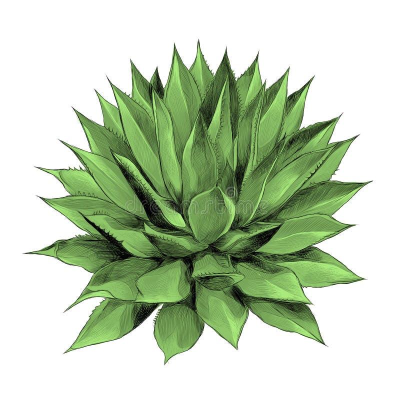 Gráficos de vetor do esboço da agave de Bush ilustração royalty free