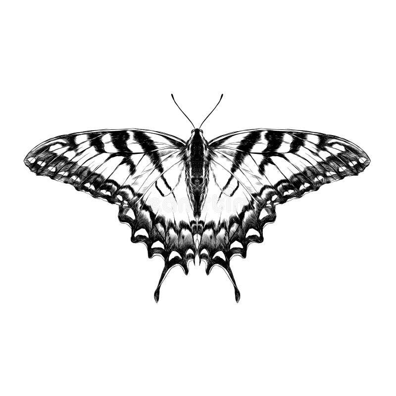Gráficos de vetor do esboço da borboleta ilustração royalty free