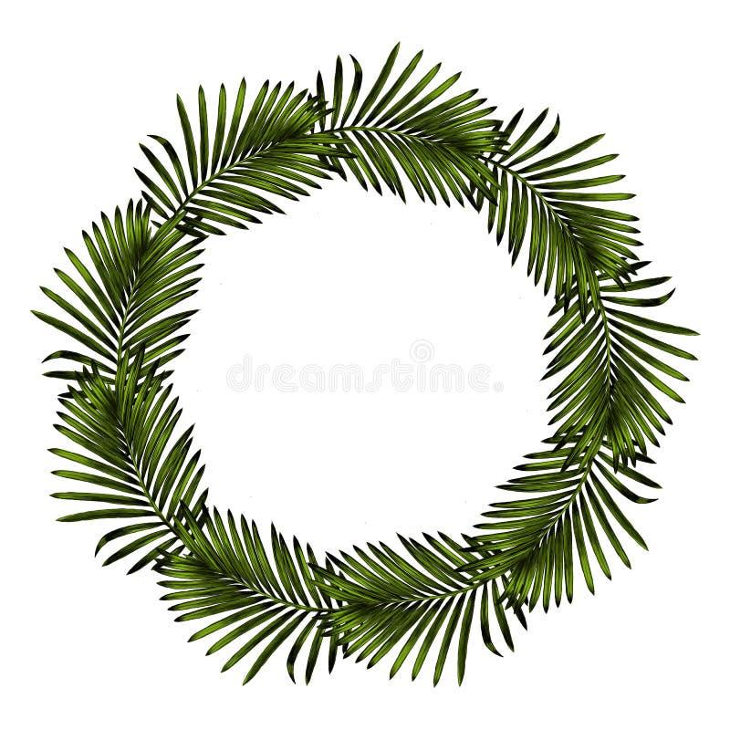 Gráficos de vetor do esboço do quadro do ramo da palma ilustração royalty free