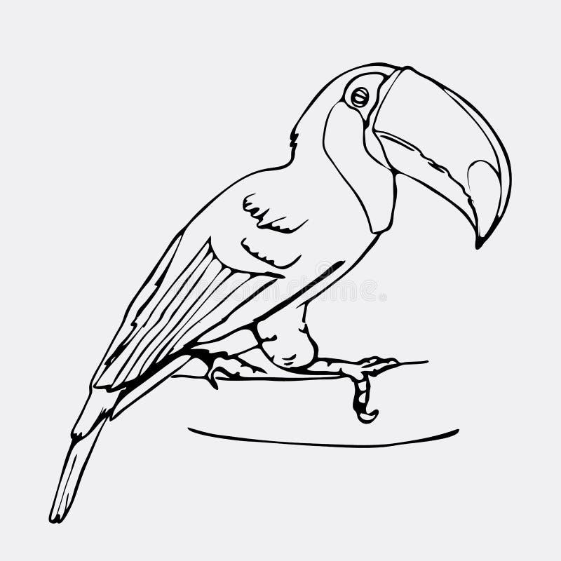 Gráficos desenhados à mão do lápis, pássaro do tucano Gravura, styl do estêncil ilustração royalty free