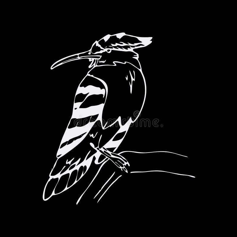 Gráficos a mano del lápiz, hoopoe, pájaro del hornbill Grabado, st libre illustration