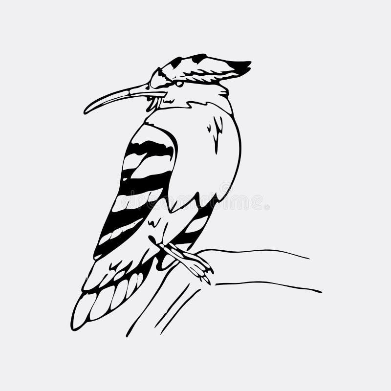 Gráficos a mano del lápiz, hoopoe, pájaro del hornbill Grabado, st stock de ilustración