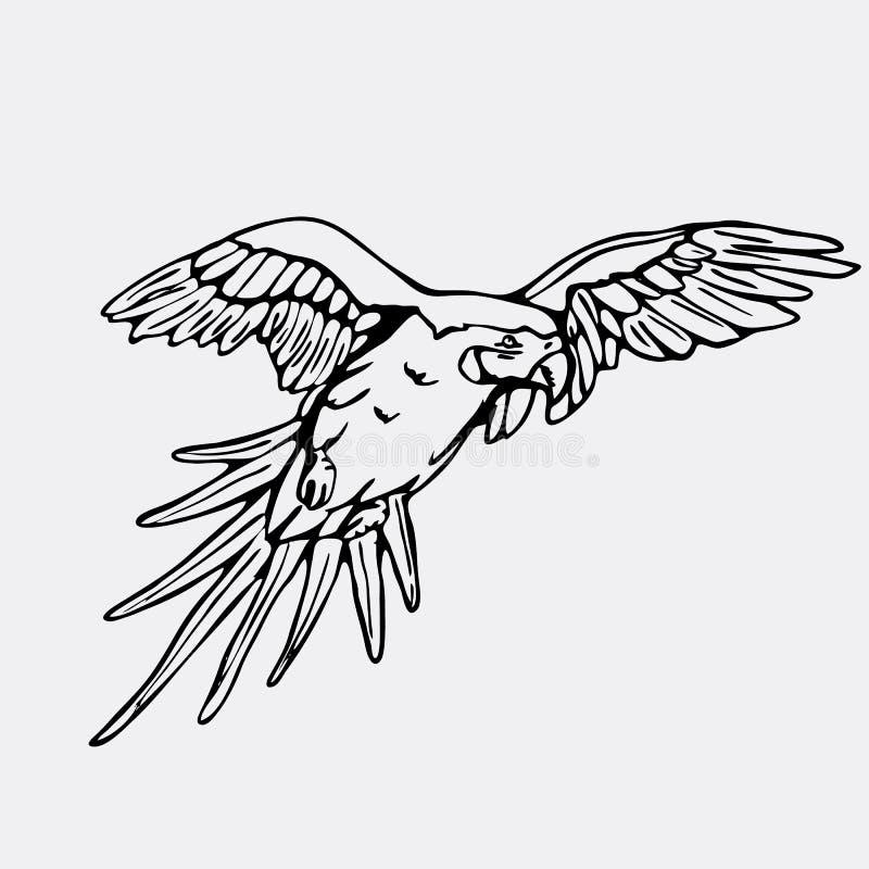 Gráficos a mano del lápiz, loro, macaw Grabado, st de la plantilla libre illustration
