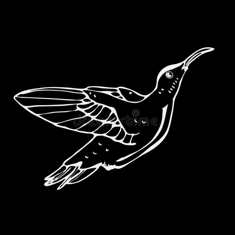 Gráficos a mano del lápiz, pájaro del colibri Grabado, pocilga de la plantilla libre illustration