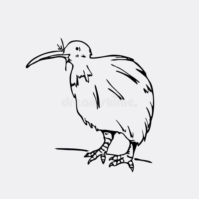 Gráficos a mano del lápiz, pájaro del kiwi Grabado, estilo de la plantilla stock de ilustración