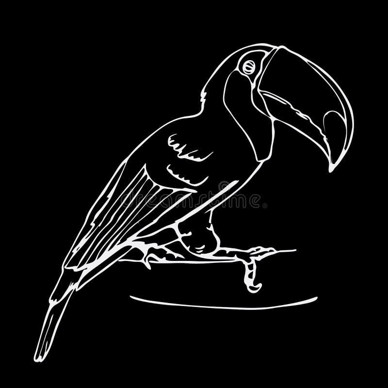 Gráficos a mano del lápiz, pájaro del tucán Grabado, styl de la plantilla stock de ilustración