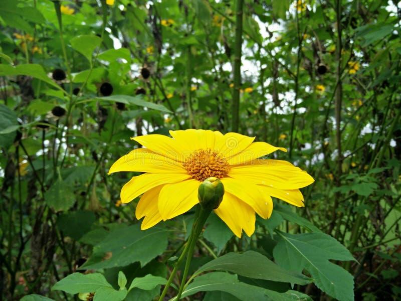 Grâce de fleur de ranganatittu photos libres de droits