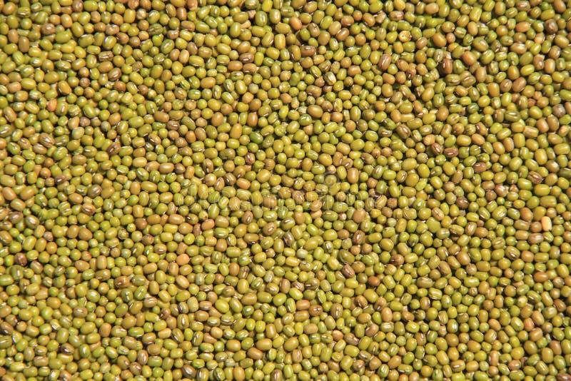 Grânulo de Mung Fundo do grânulo de Mung Material de fundo Alimento fotografia de stock royalty free