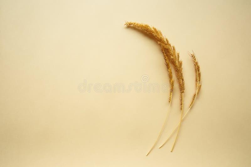 Grão amarela da natureza do alimento do trigo no fundo de papel bege fotografia de stock royalty free