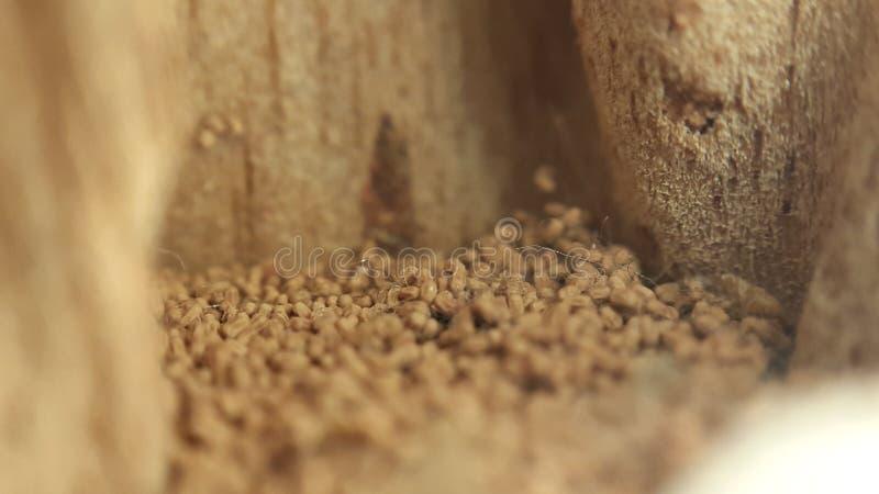 grão de madeira das mordidas da térmita fotos de stock royalty free
