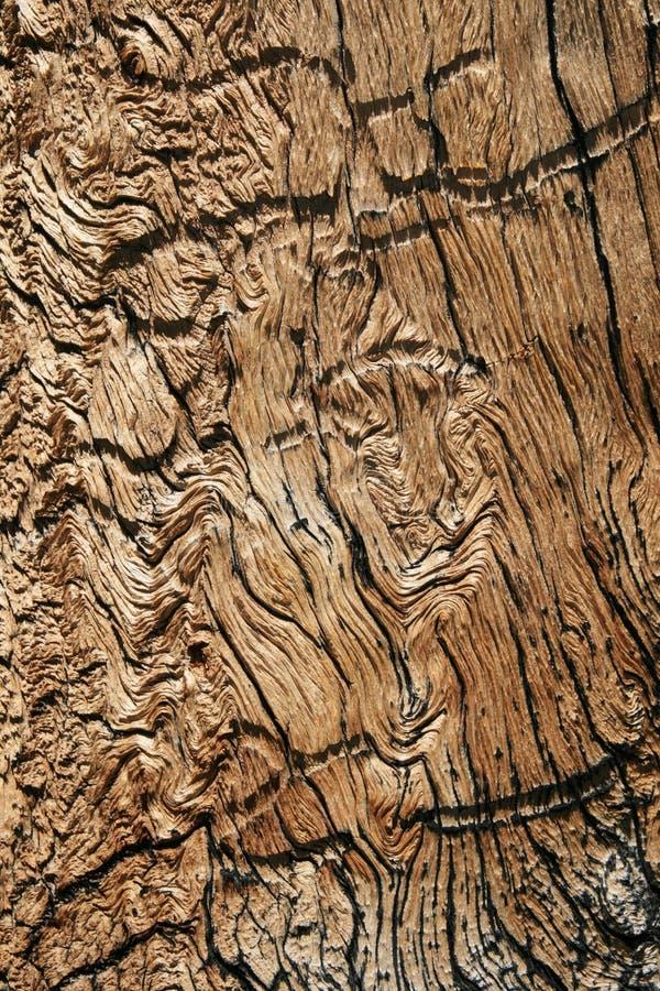 Grão de madeira ondulada fotos de stock