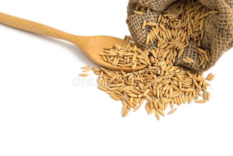 Grão seca isolada do arroz 'paddy' em uma caída com colher de madeira foto de stock royalty free