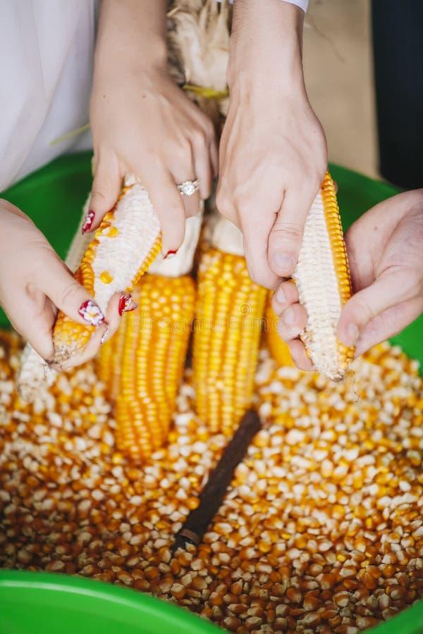 Grãos da colheita fotos de stock royalty free