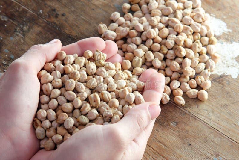 grãos-de-bico foto de stock