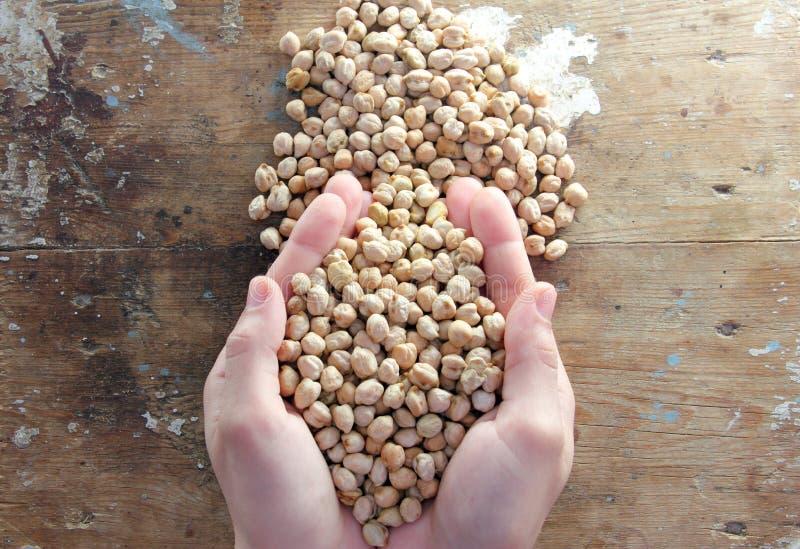 grãos-de-bico fotografia de stock