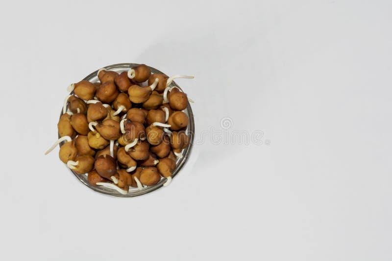 Grãos-de-bico ou brotos pretos do grama de bengal em uma bacia fotografia de stock