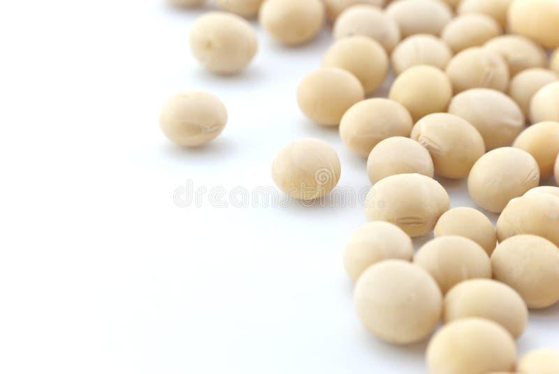 Grãos de soja - ascendente próximo - isolados fotografia de stock royalty free
