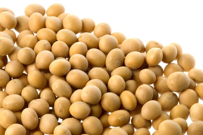 Grãos de soja isolados fotos de stock