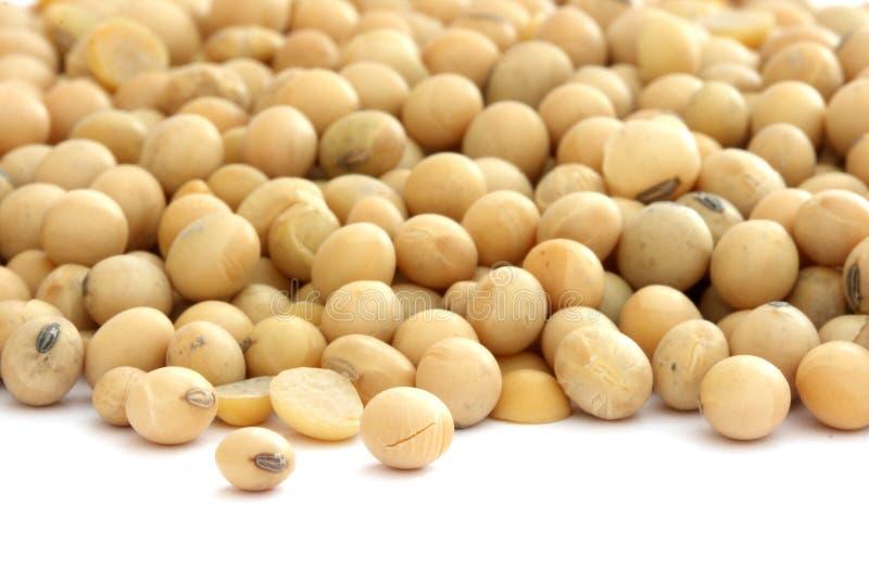 Grãos de soja no branco foto de stock royalty free