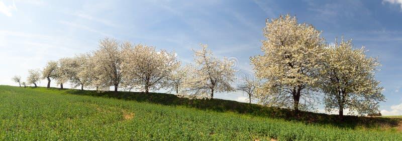 gränd av Cherrytrees royaltyfri bild