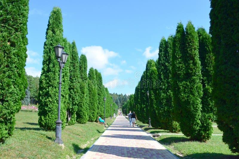 Gr?nd av cypresstr?d med en bana och tappninglyktor p? en solig sommardag royaltyfri bild