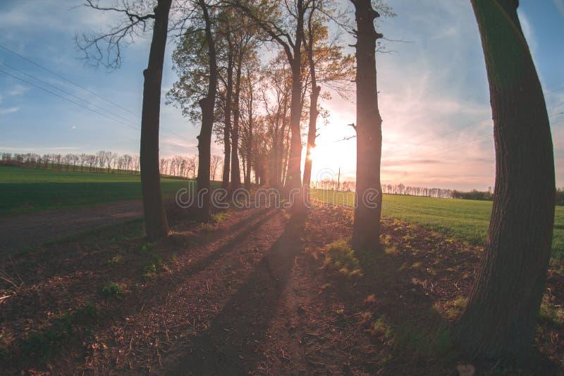 Gränd av träd i aftonen på solnedgången arkivfoto
