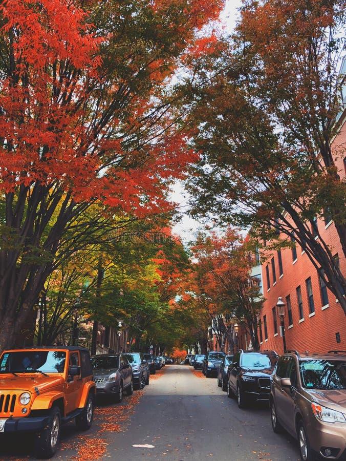 Gränd för Boston fyrområde med byggnader och träd för tegelsten röda på båda sidor arkivfoto