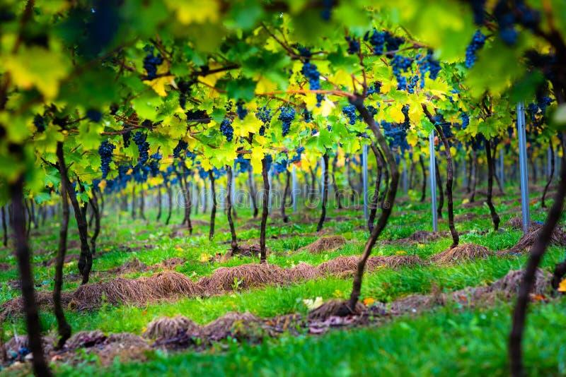 Gränd i en liten vingård arkivfoto