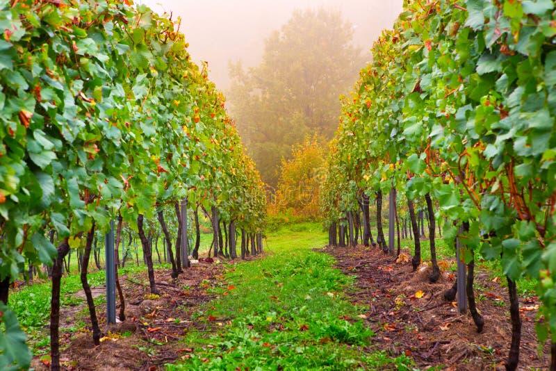 Gränd i en liten vingård arkivbilder